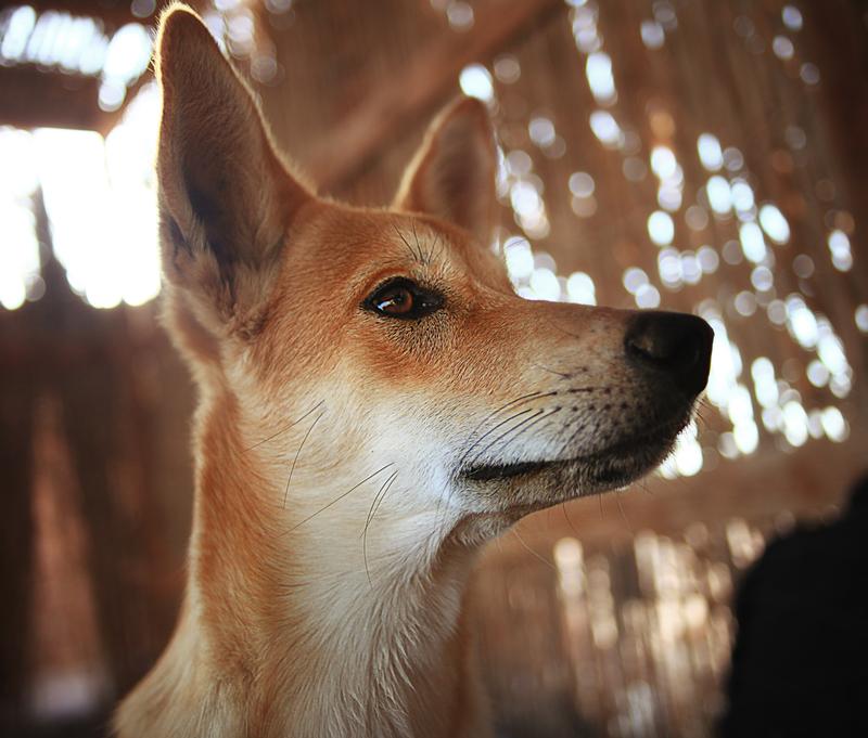 FPM Dingo brings focus to your task    (Image: (c) Sergey Kichigin | Dreamstime.com)