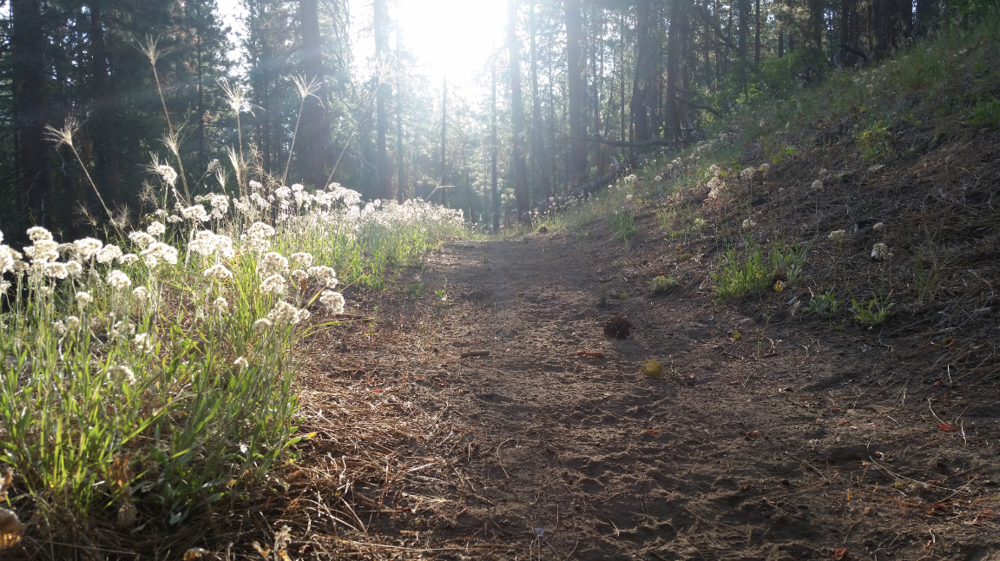 Trails like this one lead right from camp. Bring your binoculars.