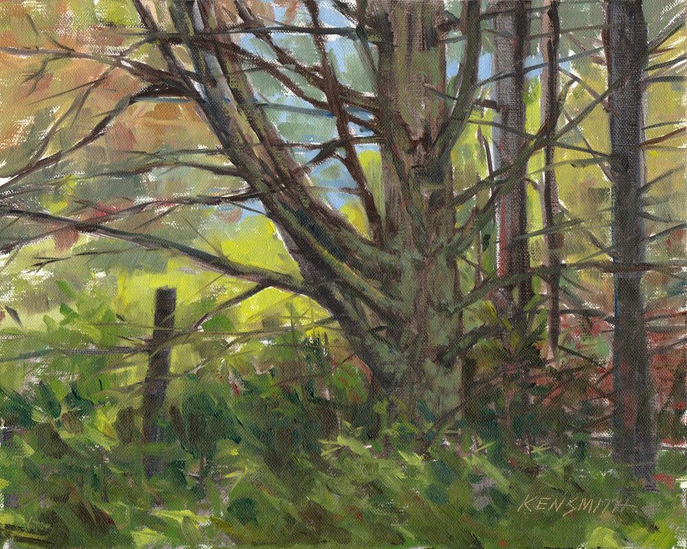 Morrisette Forest
