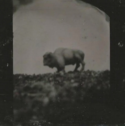 tintype toy buffalo