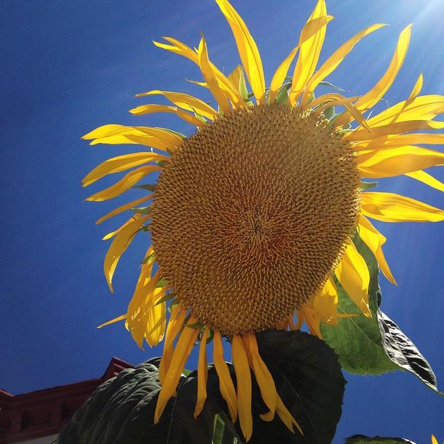 2014-08-29_1409351092.jpg