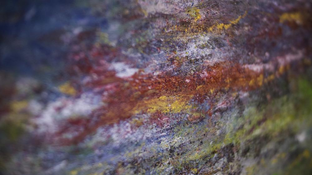Golden spirit close up2 (1).jpg