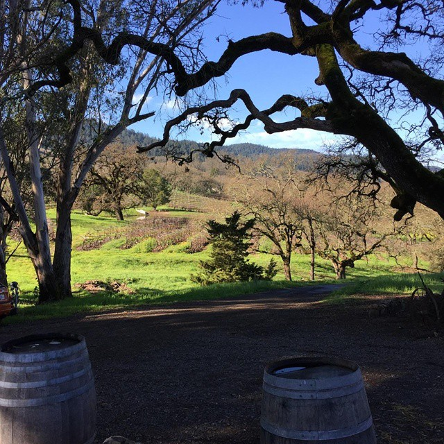 @tthroenle crushed some amazing shots while up in Napa & Sonoma this weekend.  Who wouldn't just want to sit and look at this all day??? #macleodwinery #eatplusdrink @christianvance1 @carolinevance @scottandlydia  (at Macleod Winery)