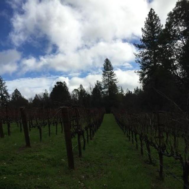Blue skies at @redcapvineyards  (at Red Cap Winery)