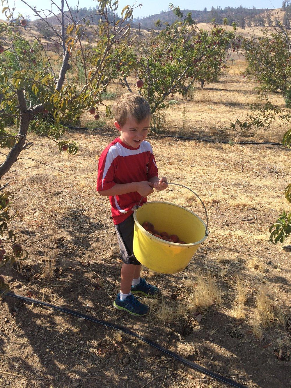 I had a helper pick peaches with me.