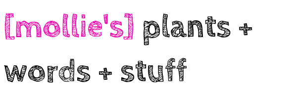 mollie's plants + words + stuff