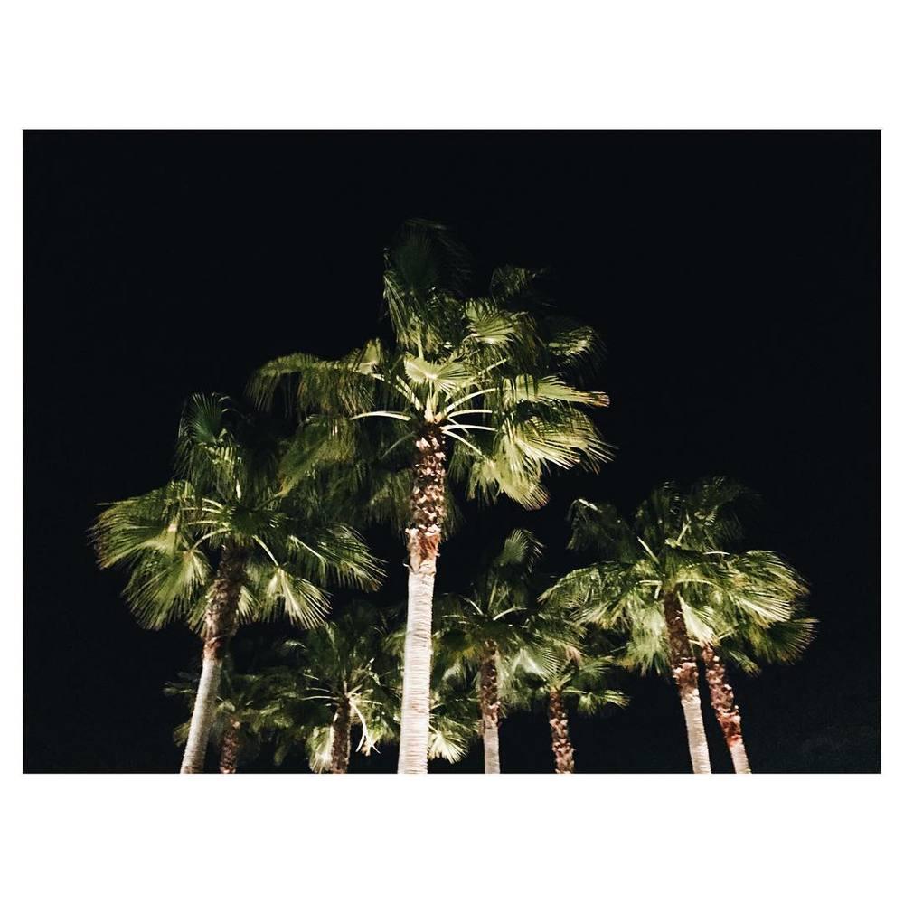 Night palms.