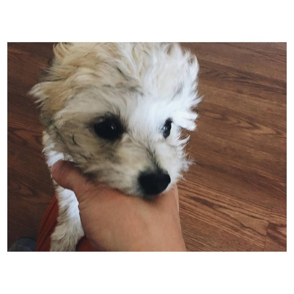Fierce tiny puppy.