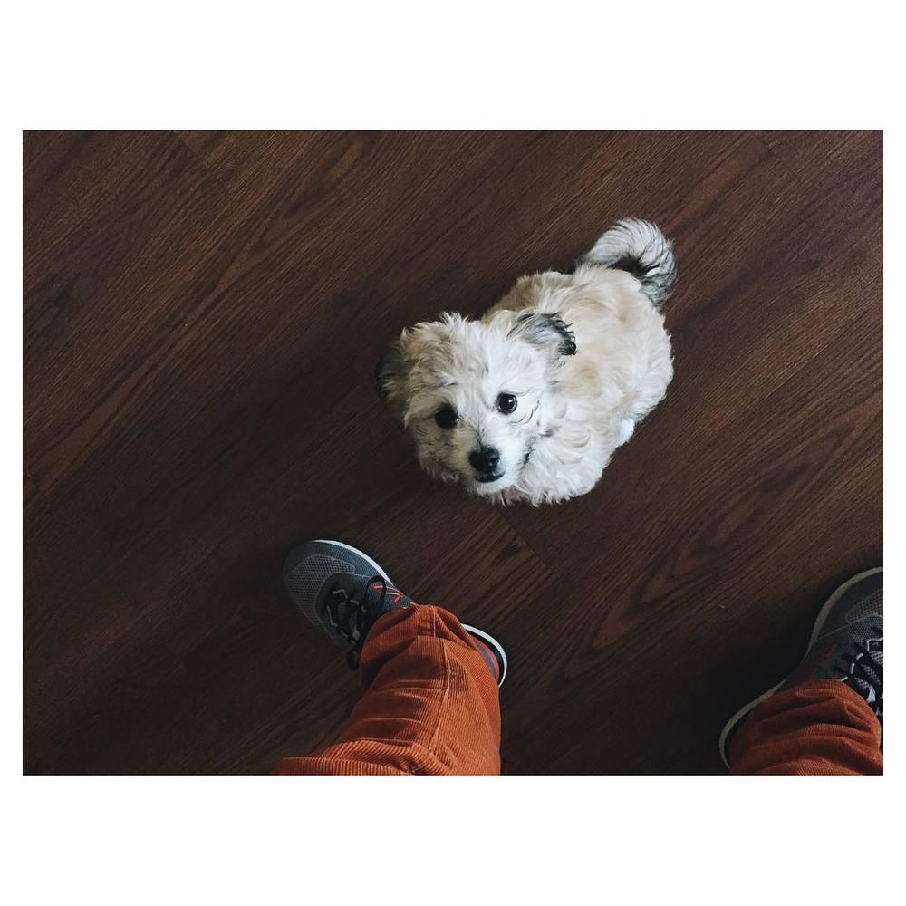 Tiny puppy.