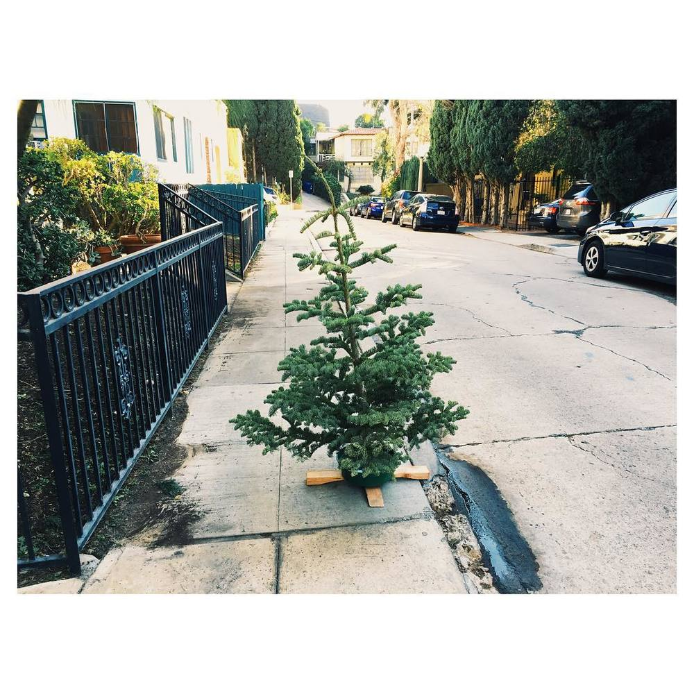 Saddest tree.