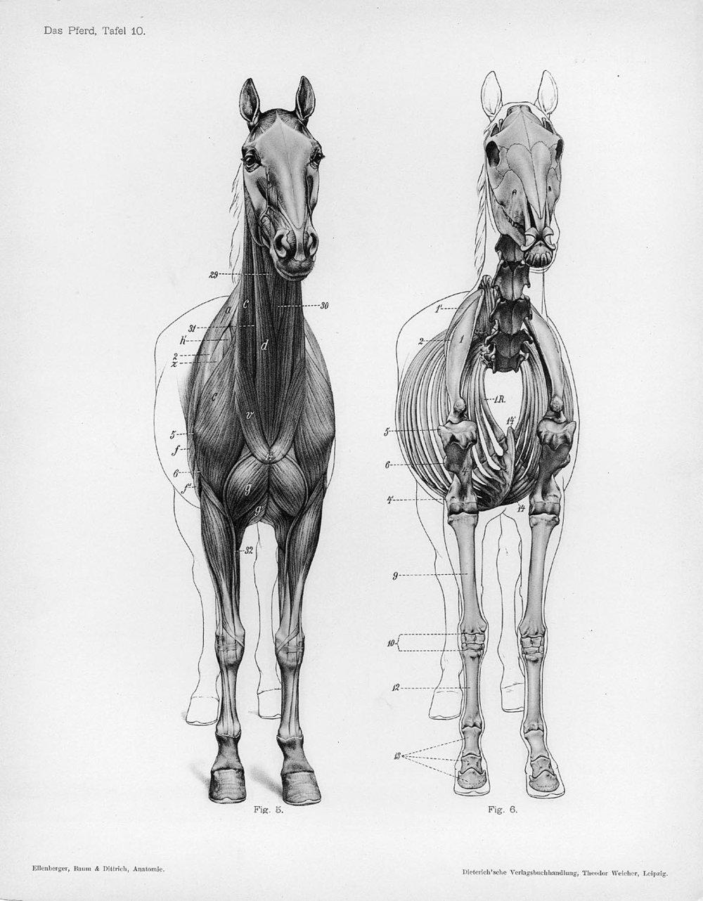 horse - 48f1cd4b18ec2164490c2afffc5eed33.jpg