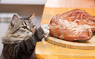 cat-steals-piece-of-meat