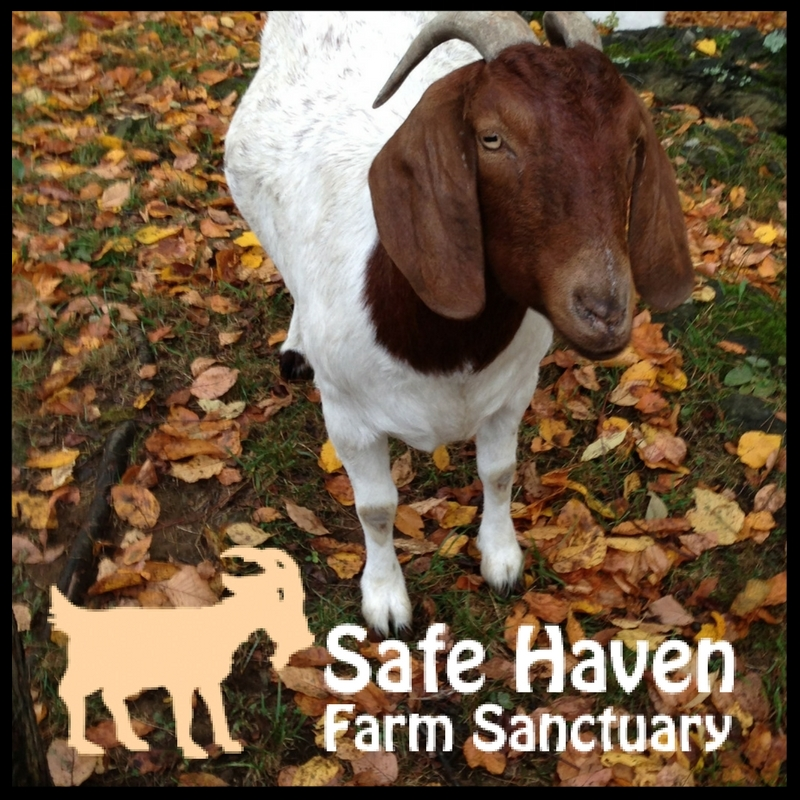 SAFE HAVEN FARM SANCTUARY
