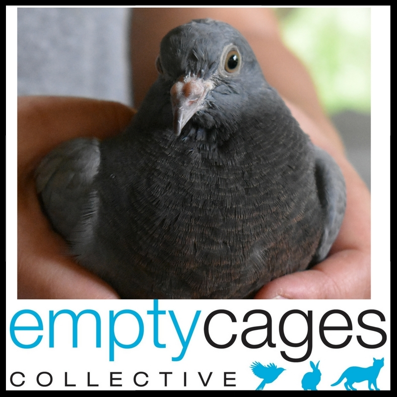 EMPTY CAGES COLLECTED