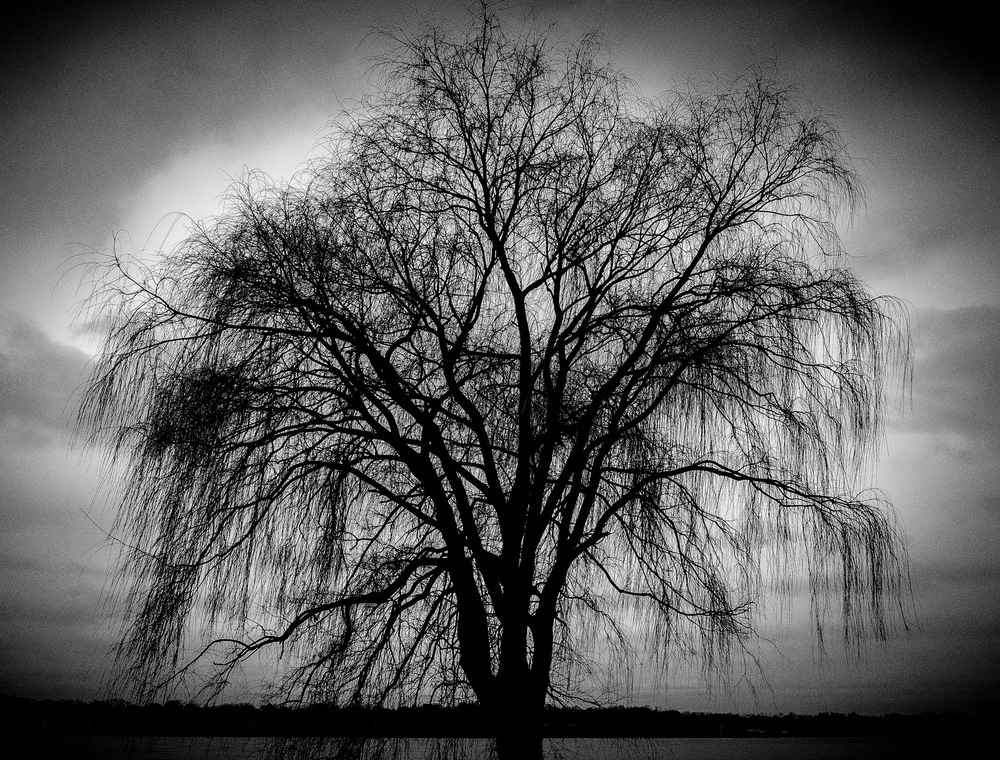 Weeping Willow Tree.jpg