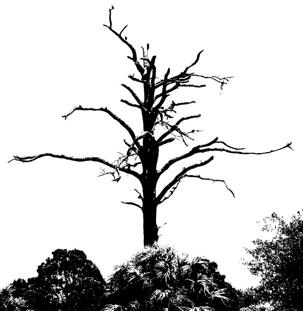 Burnt Tree - Copy.jpg