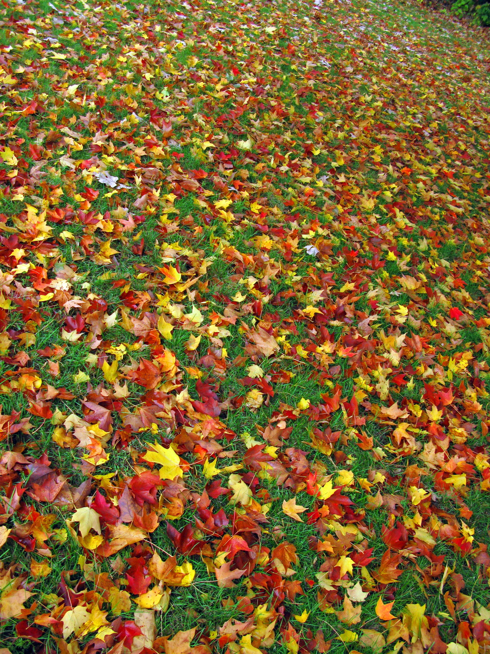 Fallen Fall Leaves.jpg