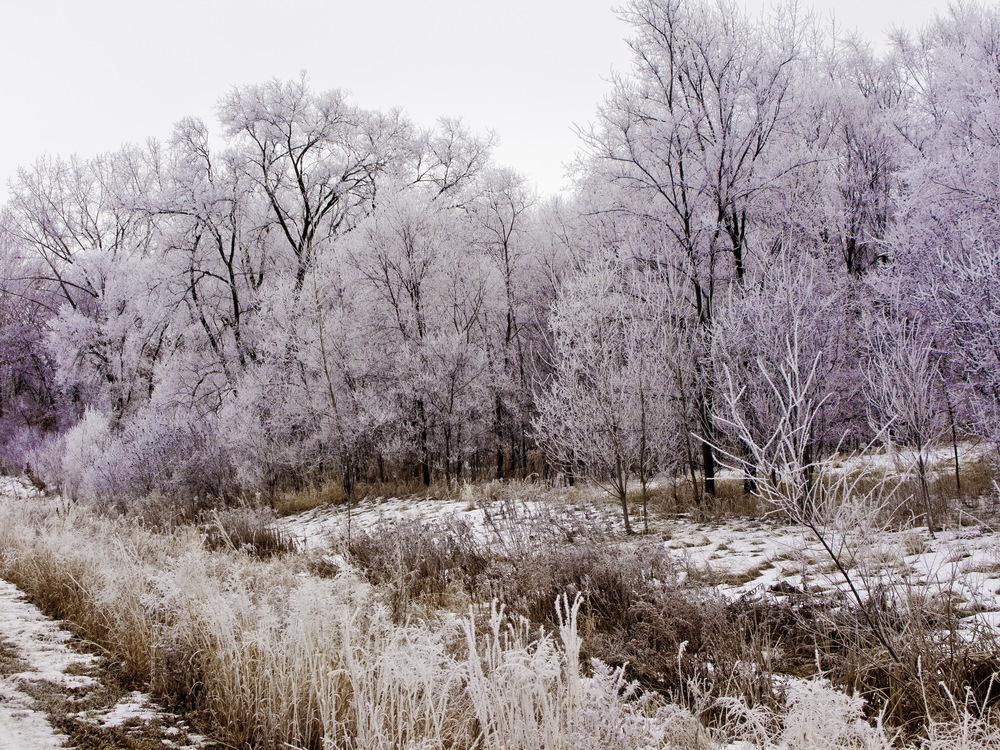 Hoarfrost Coated Park-Edit.jpg