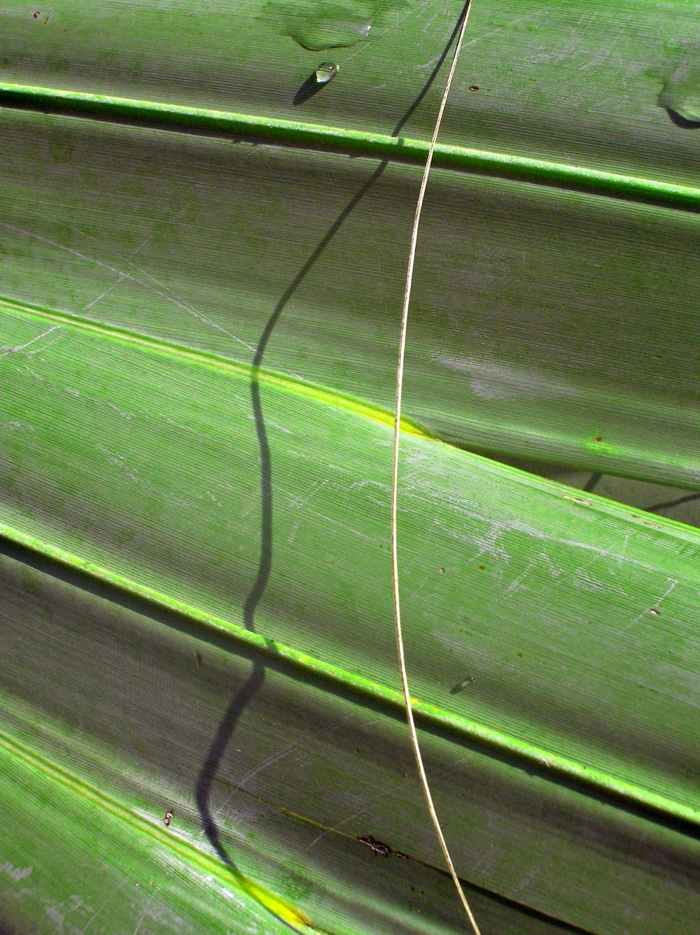 Palm Leaf Abstract.jpg