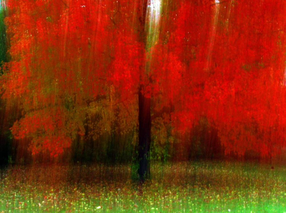 Red Maple Tree.jpg