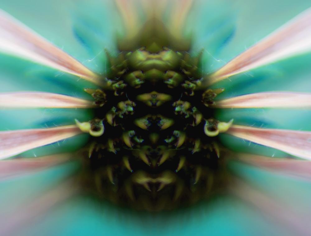 Floral Bug.jpg
