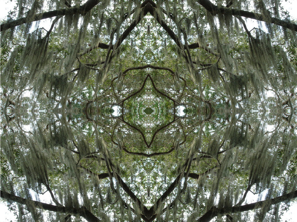 Tree & Moss Kaleidoscope.jpg