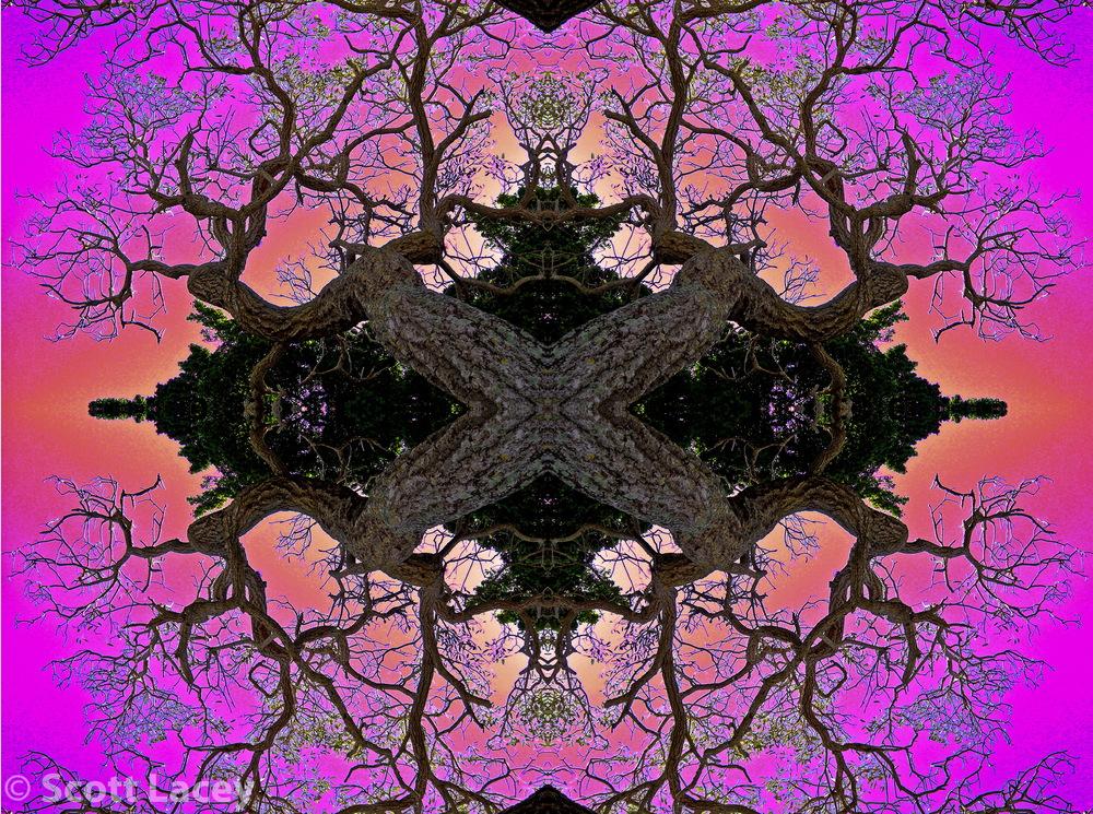 Tree Spider.jpg