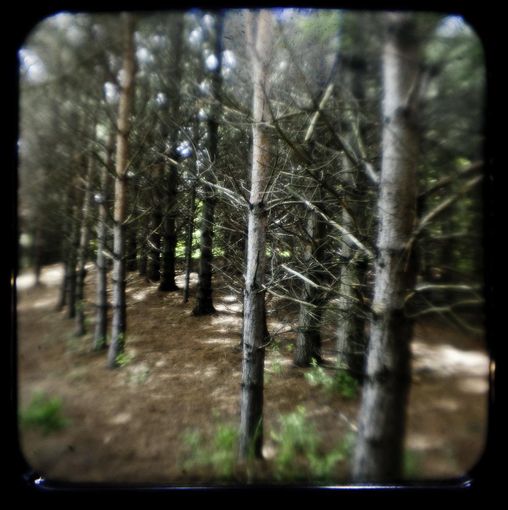 Dog Park Trees 2-Edit-Edit.jpg