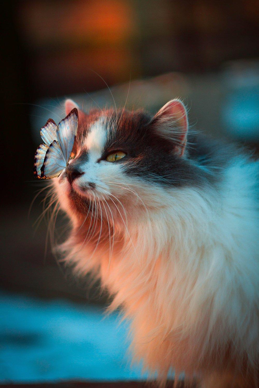 Photo by Karina Vorozheeva on Unsplash