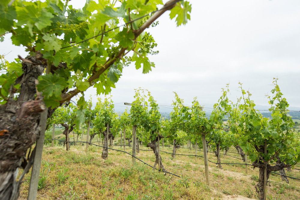 Vineyard-Gallery-2.jpg