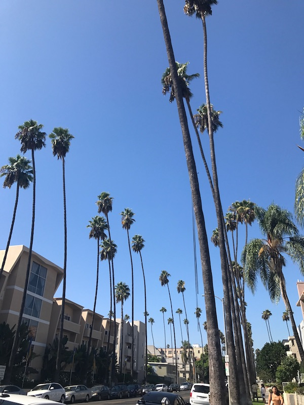 I'll never get tired of seeing palm trees against the sky...