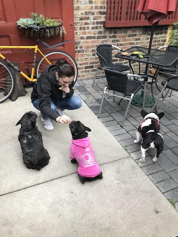 French Bulldog Rescue Event!
