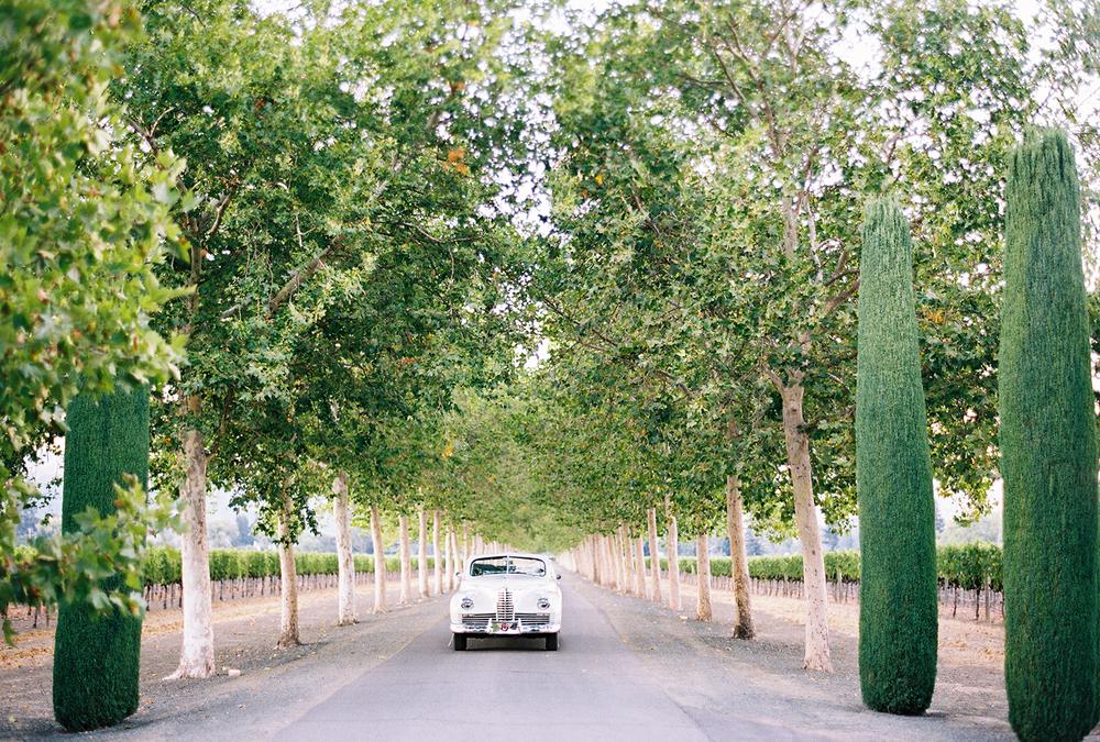 beaulieu-gardens-48.jpg