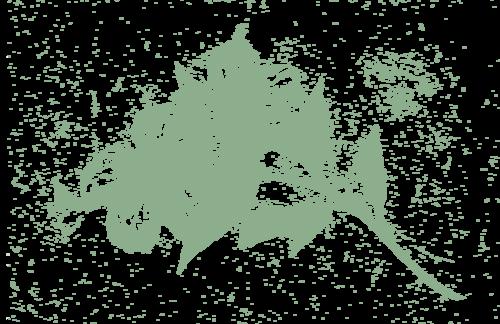 olfactory-hibiscus.png
