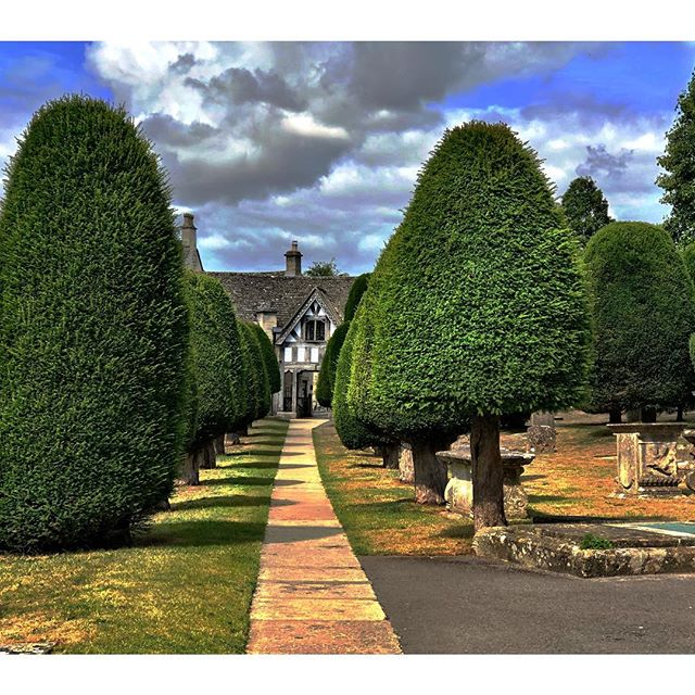 Yew trees - synonymous with English churchyards for me and many. Although it's native to Europe, northwest Africa, northern Iran and south west Asia. . . It has a long history as some trees in England and Scotland are thought to be 2000-3000 years old. These trees here in Painswick Village, Gloucestershire are from the 18th century. . . It's longevity and toxicity are thought to represent eternity and death possibly reasons it has been used in churchyards and graveyards. Also it's toxicity may have kept animals out to protect these religious sites. . . Cuttings from the Yew tree are extremely poisonous for humans and animals but in the late 60s it was discovered that compounds in the bark have anti cancer agents. And it's used in the chemotherapy drug Paclitaxel. . . Yew wood was also used to make medieval bows. One of the world's oldest surviving wooden artifacts is the Clacton spear found in Essex UK in 1911 which was made of Yew. Thought to be over 400,000 years old. . . My kids loved running about this beautiful churchyard in Painswick Village, perhaps they picked up on the incredible history of these trees, or perhaps they just loved the space again to run free in the fresh air.  #yewtrees #englishchurch #englishchurchyard #treepower #trees #groundyourself #nature #plantmedicine #painswick #painswickvillage #painswickchurch #englishsummer