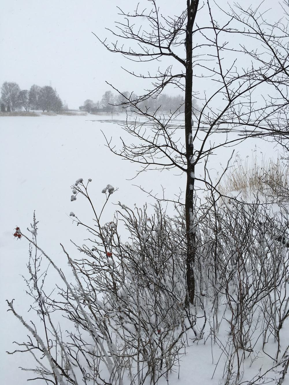 Sibeliuksenpuisto frozen over / Helsinki / 12 Jan 2016