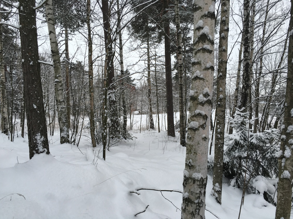 Woods behind Kulosaari lukio / Kulosaari, Helsinki / 18 Jan 2016