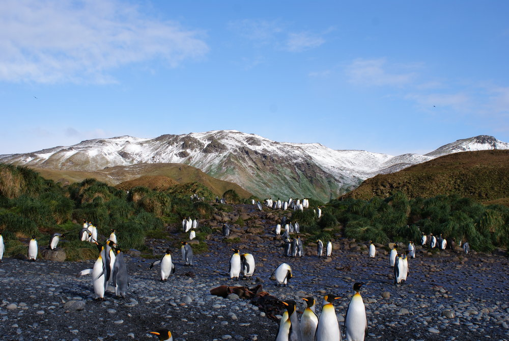 Wildlife in the Subantarctic. Photo: Josie van Dorst