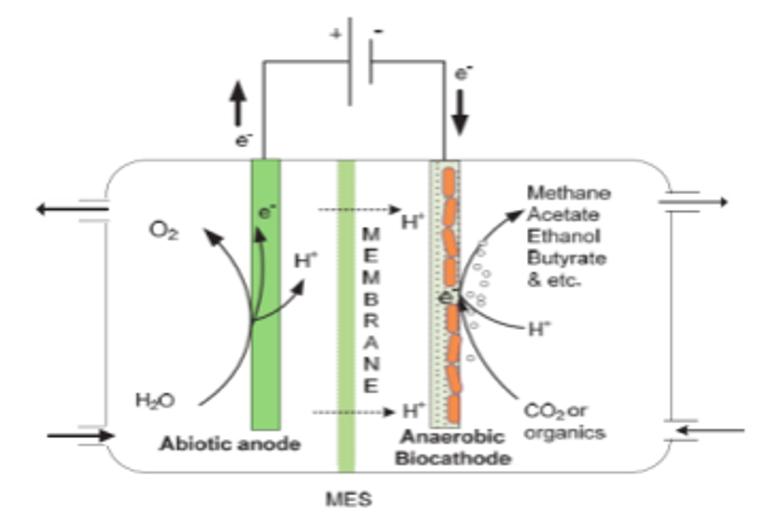 Proces biokatalizy