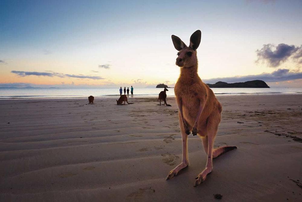 We have kangaroo's on the beach. How could you resist beach kangaroo's?
