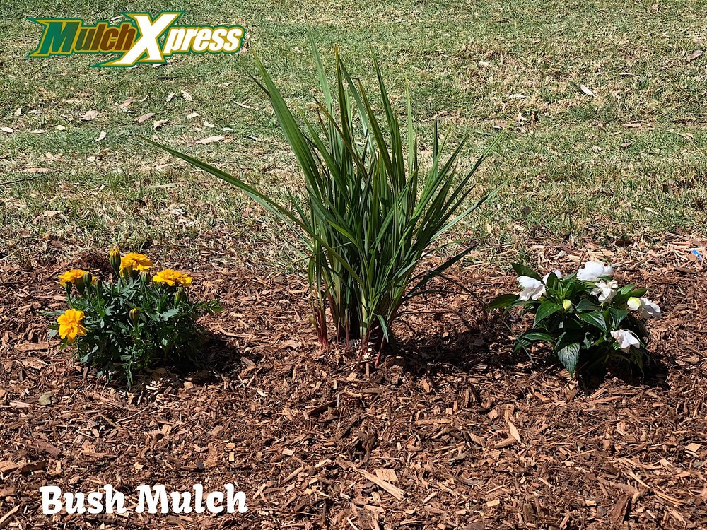 Bush Mulch1.jpg