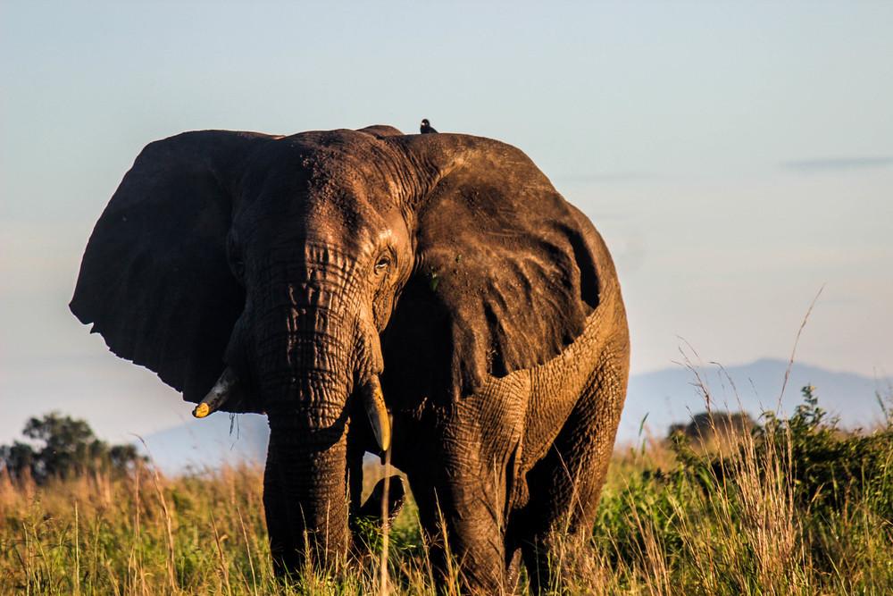 Kidepo National Park // Uganda 2016