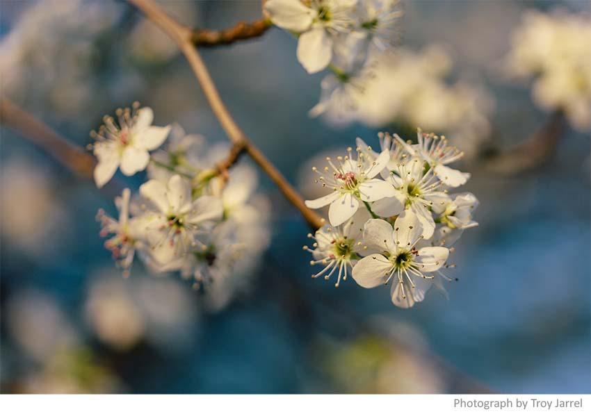 spring-flowers-1.jpeg