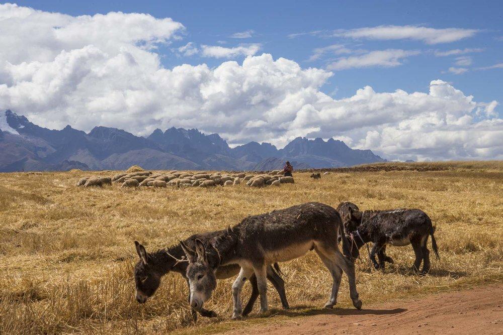 Copy of Stunning vistas of the Sacred Valley near Maras