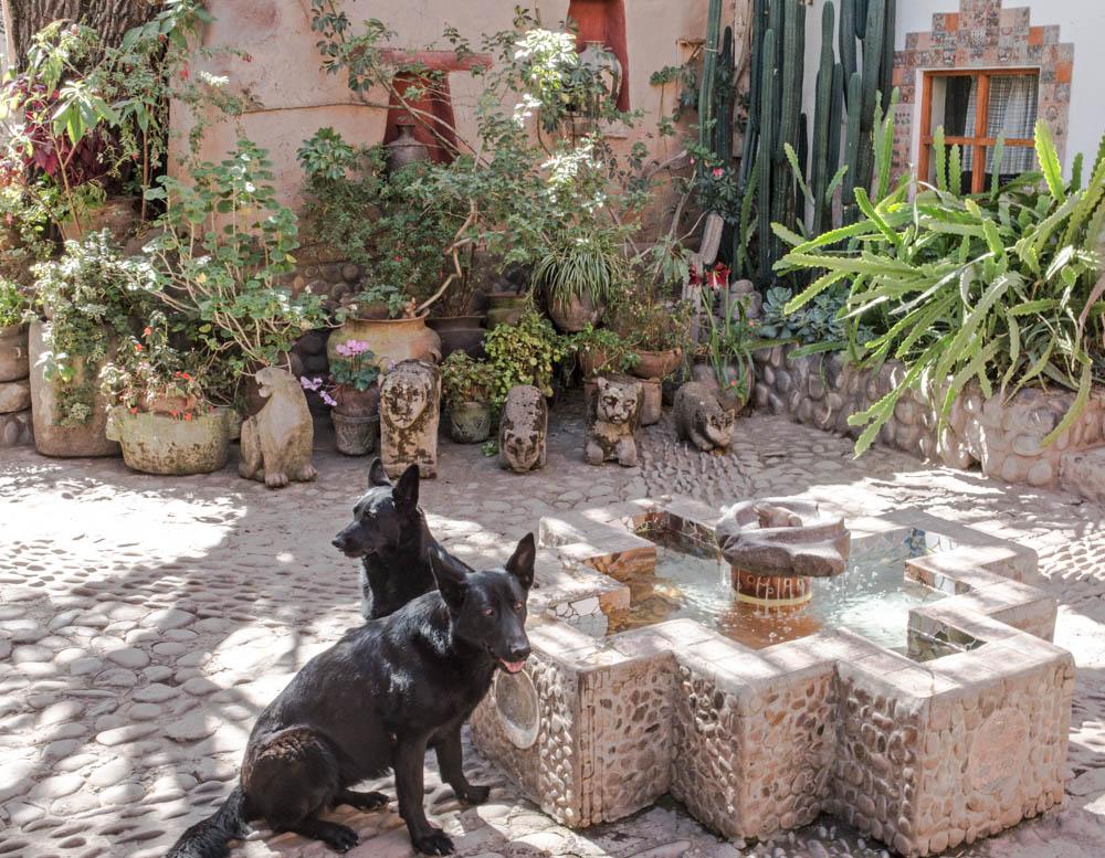Copy of Seminario Dogs