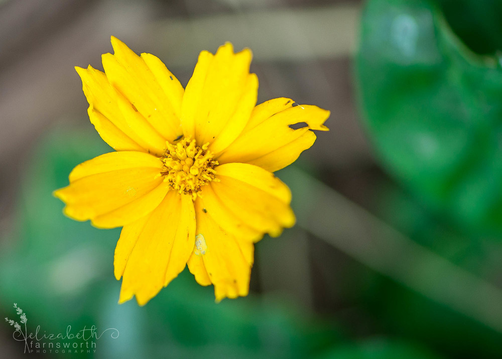 Macro Photography © Elizabeth Farnsworth Photography