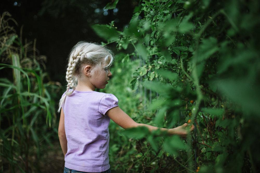 girl picking tomatos