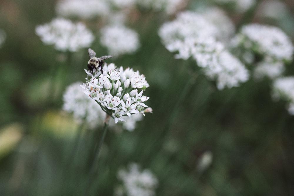 black bee on flower