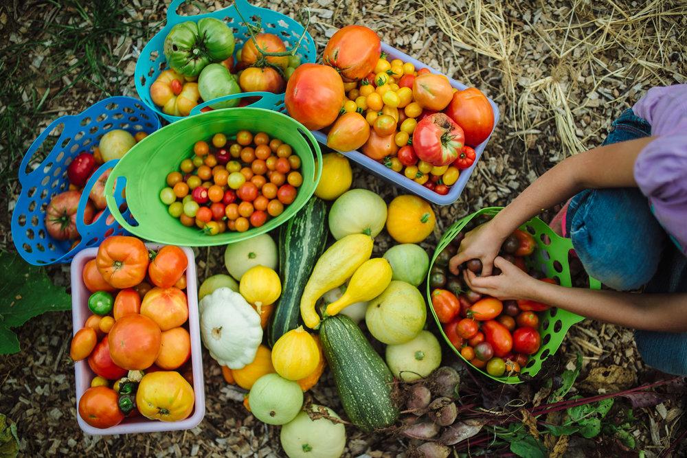 garden harvest full of vegetables