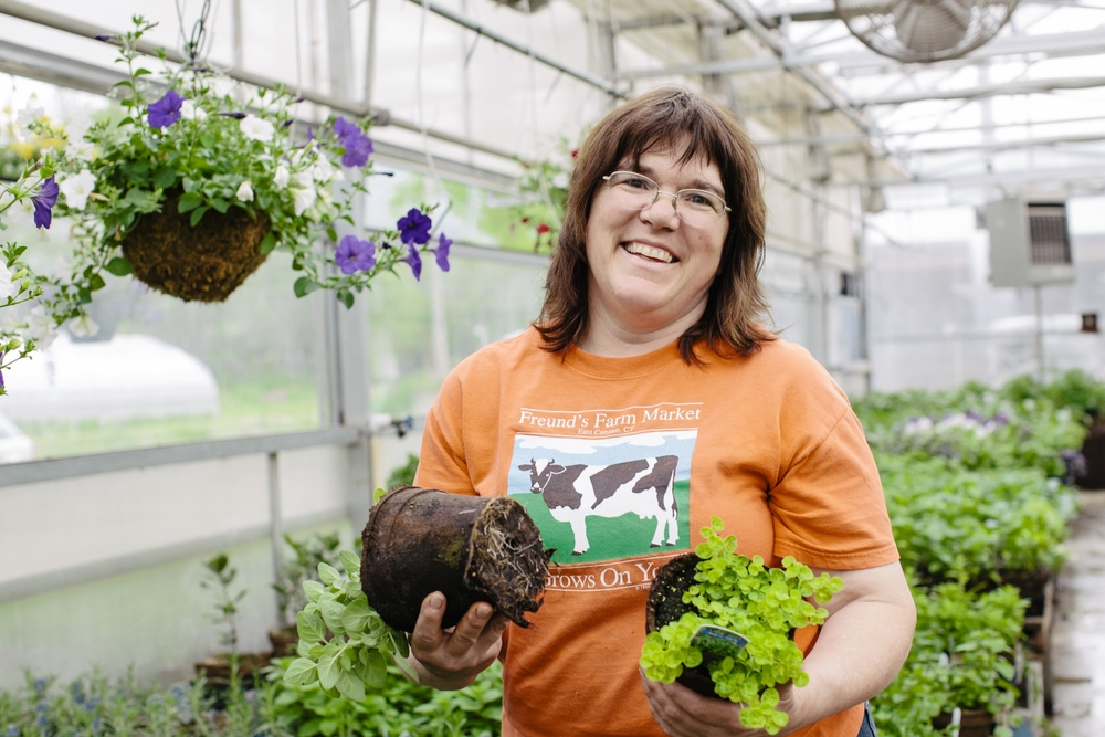 photo credit: Cabot Creamery   Theresa Freund, owner of Freund's Farm Market shows off homegrown herbs growing in CowPots.